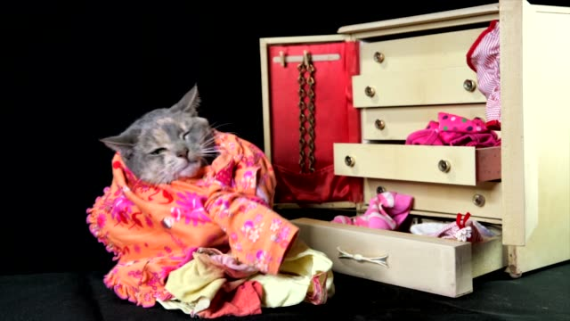 slow motion cute cat going through her clothing in her wardrobe dresser video