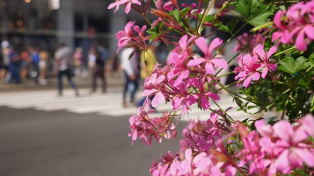 Slow Motion Dolly Reveal Pedestrians in Manhattan Crosswalk video