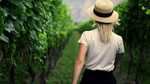 slow motion effekt av kvinnlig agronom promenader i vingård plantage med växande druva - fruktträdgård bildbanksvideor och videomaterial från bakom kulisserna