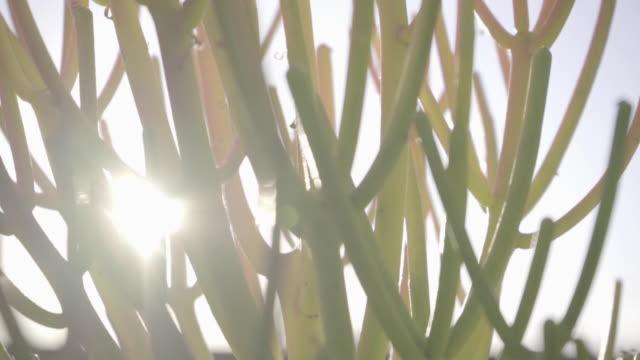 slow motion fire plants plant cactus