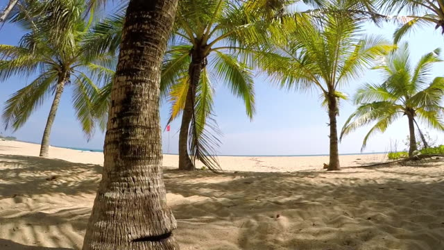 Slow motion footage of person walking through palms Slow motion POV footage of person walking through palm growth on beach in Sri Lanka coconut palm tree stock videos & royalty-free footage