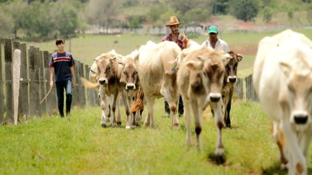 スローモーションの祖父父子の家族の牧場に - 家畜点の映像素材/bロール