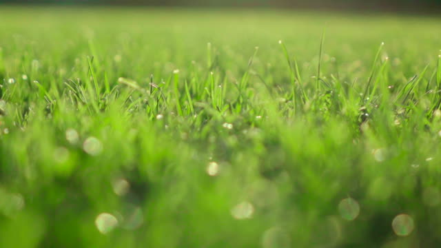 Slow motion: Gras field video
