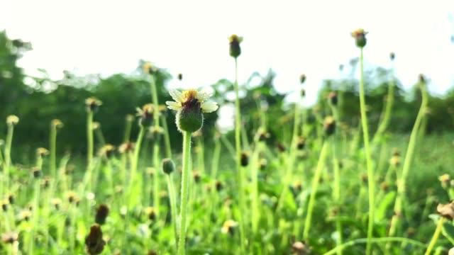 vídeos y material grabado en eventos de stock de lento movimiento verde hierba y flor en campo - manzanilla