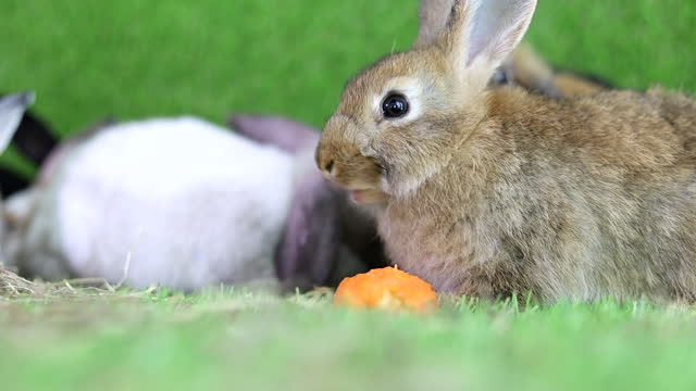 Slow motion, Happiness rabbit clearing and move on green background.