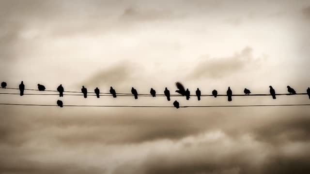 Slow motion HD: Pigeon on the wires video