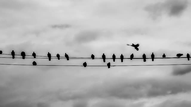 Slow Motion HD: Pigeons on telephone wires video