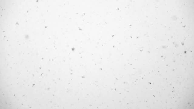Slow Motion HD - Snow falling on white backround video