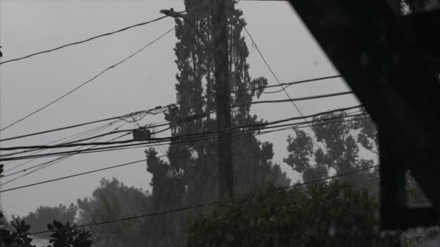 vídeos y material grabado en eventos de stock de líneas eléctricas de tormenta saciera sin viento sacidos y árboles en el fondo - descarga eléctrica