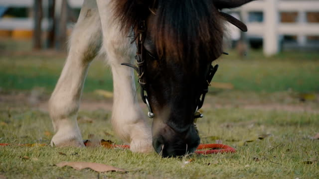 Slow Motion Horse eating grass video
