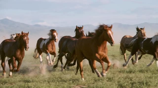 slow motion horses and cowboys in utah usa - organizm żywy filmów i materiałów b-roll