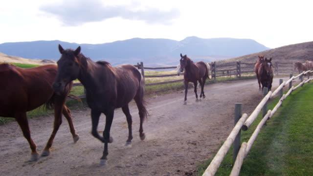 rallentatore-cavalli trotting 06 - stallone video stock e b–roll