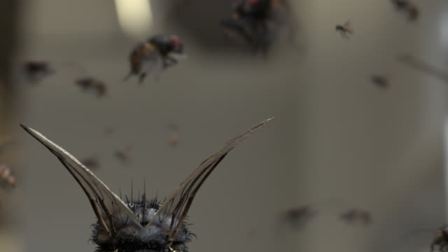 Slow motion house flies