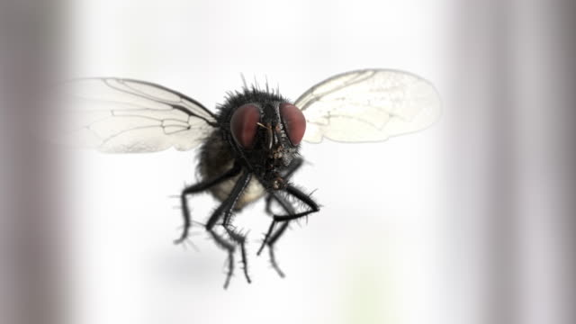 Slow motion house fly