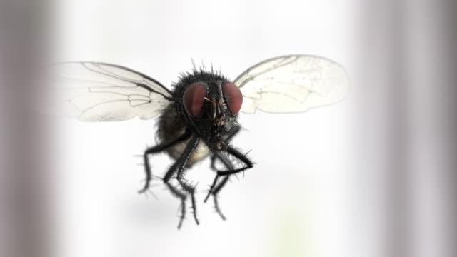 yavaş hareket ev sinek - sinek stok videoları ve detay görüntü çekimi