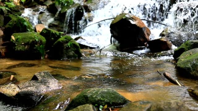 slow motion, mae kampong vattenfall i chiang mai, thailand - städsegrön växt bildbanksvideor och videomaterial från bakom kulisserna