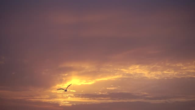 slow motion, majestic sunset and one bird flies to sun. - aquila video stock e b–roll