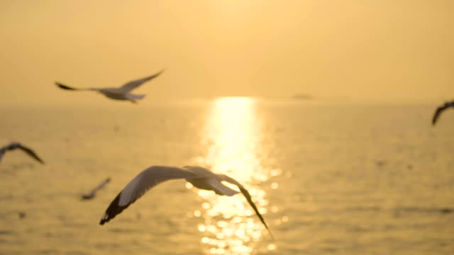 Slow motion, Many seagulls fly slowly in the sky above the sea during the sunset. Slow motion, Many seagulls fly slowly in the sky above the sea during the sunset. seagull stock videos & royalty-free footage