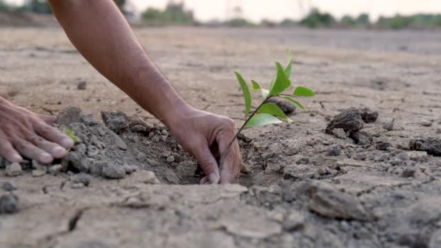 stockvideo's en b-roll-footage met slow motion men handen planten bomen op dorre grond, ecologie concept - new world