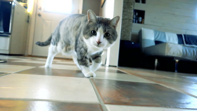 Slow Motion of a Cat Playing and Hunting Cat Playing and Hunting a Mouse Toy in Slow Motion domestic cat stock videos & royalty-free footage