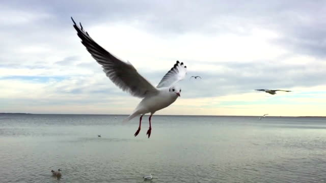 замедленная съемка с чайка - птица стоковые видео и кадры b-roll