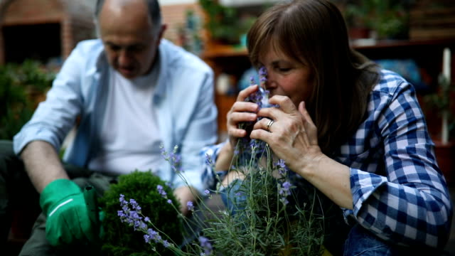 Slow motion of a senior woman smelling lavender Slow motion of a senior woman smelling lavender potted plant stock videos & royalty-free footage