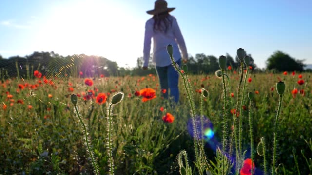 Slow motion of a Young farmer woman with a hat, dressed in white, walking through colourful poppies field full of blossoming flowers.