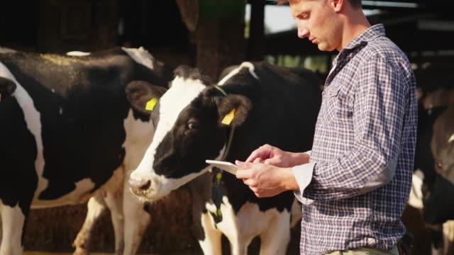 若い農家のスローモーションは、農場で生物乳製品産業に使用され、カメラで微笑む成長牛の状態を制御するためのタブレットを使用しています - 牧畜場点の映像素材/bロール