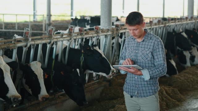 vídeos y material grabado en eventos de stock de la cámara lenta de un joven agricultor está utilizando una tableta para controlar un estado de vacas cultivadas utilizadas para la industria de productos lácteos biológicos en una granja y sonriendo en cámara - animal joven