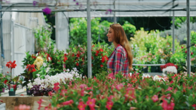 vídeos de stock e filmes b-roll de slow motion of an young happy woman is choosing fresh seasonal flowers to buy for her garden in a plant shop greenhouse in a sunny day - liga desportiva