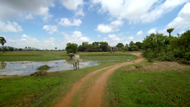 POV slow motion of Asian countryside paths video