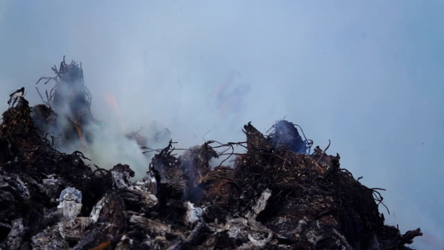 slow motion of burned garbage. - incendio video stock e b–roll