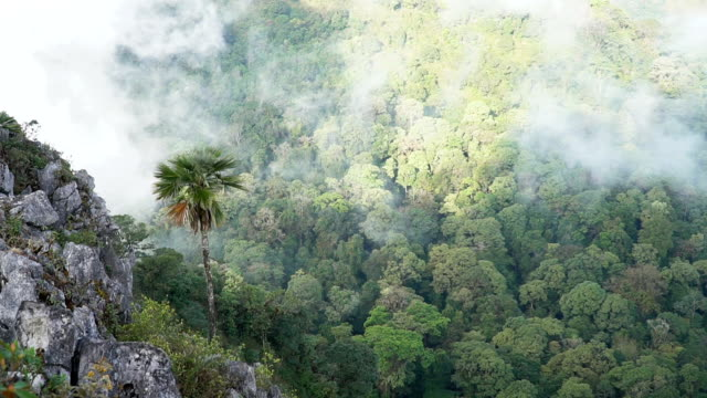 vidéos et rushes de mouvement lent des nuages se déplaçant au-dessus du palmier et de la chaîne de montagne - évasion du réel
