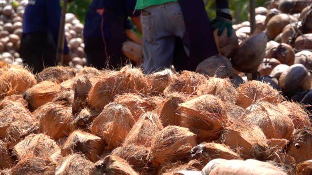 slow motion av kokos peeling - skalhylsa bildbanksvideor och videomaterial från bakom kulisserna