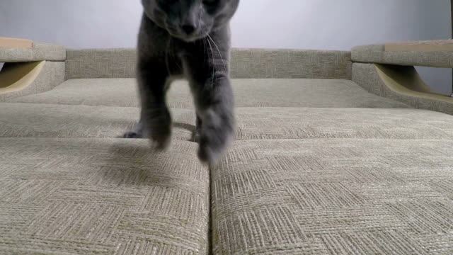 Slow motion of cute domestic cat hunter jumping video