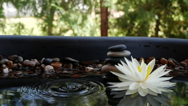 Slow motion of drop falling down into water near balance stones and white lotus flower