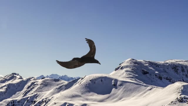 slow motion of flying eagle. - aquila video stock e b–roll