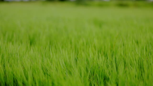 Slow motion of Green grass field and small hills on blue sky with clouds
