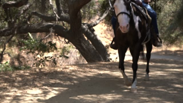 slow motion of horse rider passing by on an outdoor trail This slow motion video shows a  horse rider passing by on an outdoor trail. horseback riding stock videos & royalty-free footage
