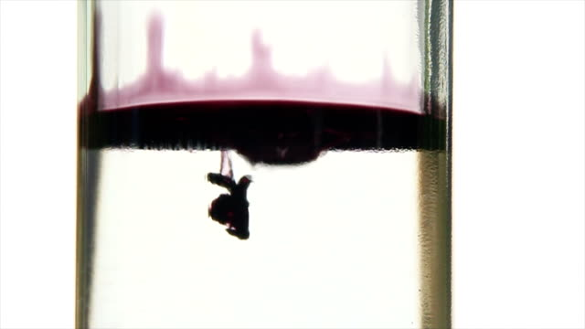 Slow motion of ink or blood drip in water video