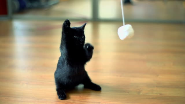 slow motion z kociak gra. - kociak filmów i materiałów b-roll
