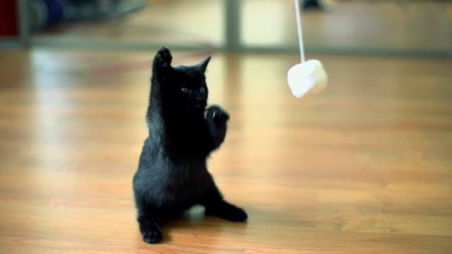 Slow motion of Kitten playing. Kitten playing wool ball. Slow motion. kitten stock videos & royalty-free footage