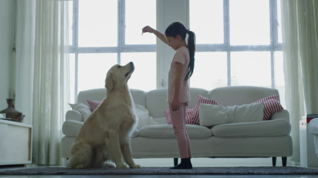 slow motion of little girl playing and cuddling her dog in living room. - bambino cane video stock e b–roll