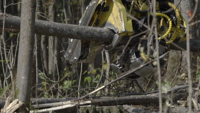 Slow motion of Logging machine cutting down trees, cutting branches and laying trunks for further transportation to the woodworking factory - video