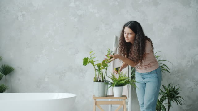 Slow motion of pretty lady caring for plants at home spraying with water Slow motion of pretty lady caring for pot plants at home spraying with water using spray bottle smiling enjoying housework. People and floristry concept. flower pot stock videos & royalty-free footage