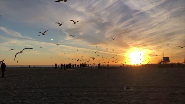 slow motion van meeuwen die tijdens zonsondergang vliegen video