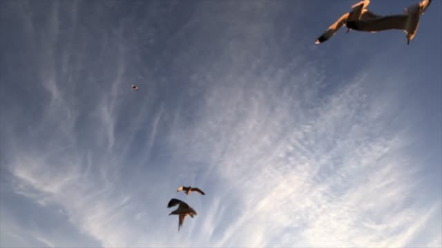 Slow motion of seagulls flying video