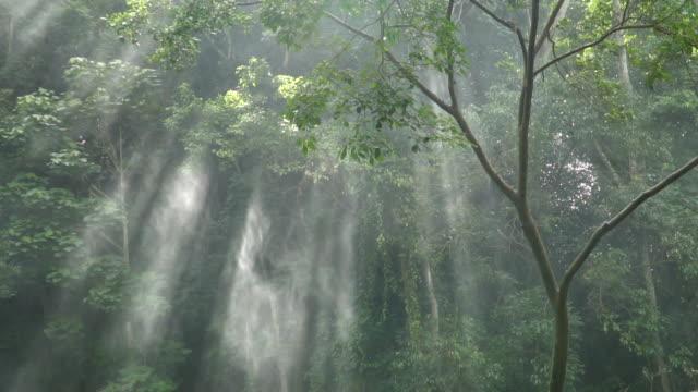 slow motion della luce solare attraverso gli alberi con spray. - 20 o più secondi video stock e b–roll