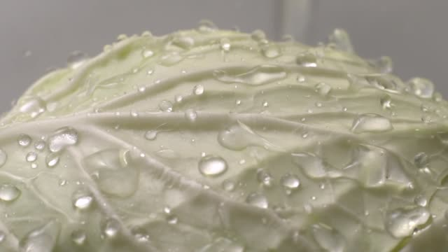 Slow motion of Water drop onto cabbage Slow motion of Water drop onto cabbage on white background cabbage stock videos & royalty-free footage