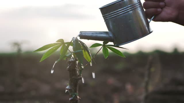 Slow Motion of watering with a watering can a young plant tree growing on fertile soil in the morning light and sun. Conservation of Natural Resources. Planting the trees, protect nature Slow Motion of watering with a watering can a young plant tree growing on fertile soil in the morning light and sun. Conservation of Natural Resources. Planting the trees, protect nature branch plant part stock videos & royalty-free footage